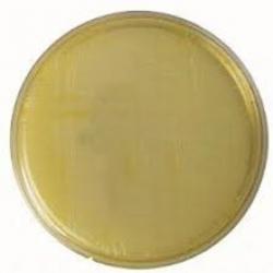агар фенилаланин сухой 0,5 кг